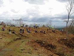 東日本大震災復興植樹